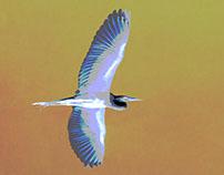 Egret for Textile Print