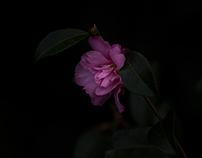 Rosalind Park Flowers