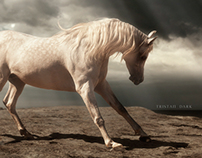 An Arabian stallion