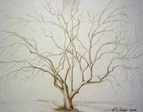 MIniature Nude Trees