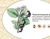Черноплодка / Chernoplodka. Guerrilla gardening