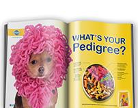 Ad Campaign: Pedigree