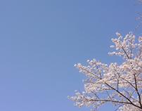 Spring 2014 in Tokyo