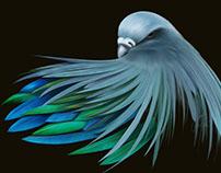 Nicobar Dove
