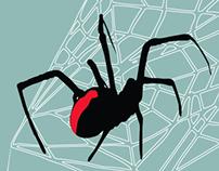 Redback Spider Web Structure