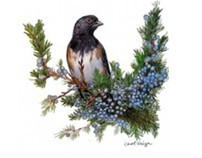 Bird Colored  Pencil Drawings