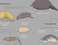 Family Tree of Armadillos