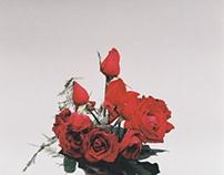 """""""De corazones y rosas"""" (PH)"""