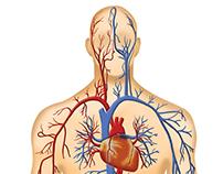 Various Medical Illustrations