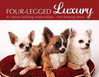 Four-Legged Luxury Branding