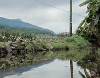 Step into the countryside- Tai Po (大埔區)
