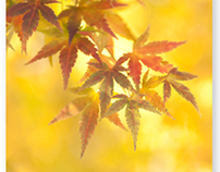 紅葉マクロ(Autumn leaves macro)