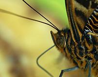 Some butterflies - part 2