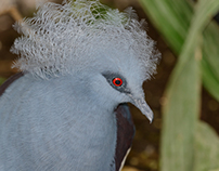 In the look of birds