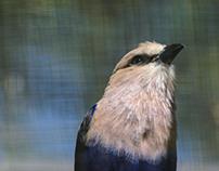 In the look of birds - part 2