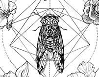 Cicada and wasp