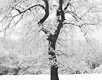 Tree & Snow Forms