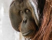 In the look of monkeys