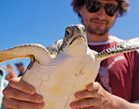 Green Turtle Release in Turks & Caicos