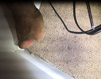 Termites Hidden Beneath the Carpets 1300 552 234 | Term