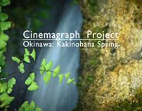Cinemagraph (Okinawa: Kakinohana Spring)