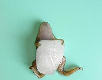Ice frog