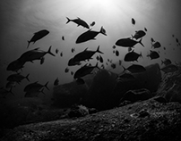 A Hymn for Poseidon