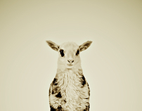 Animal Series by Pernille Westh