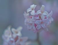 """harugasumi"" spring light haze"
