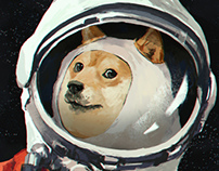 DOGE much space