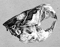 North American Beaver Skull Rendering
