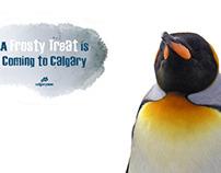 Calgary Zoo: Penguin Plunge