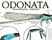 Ilustración Científica - Tec. de Ilustración -Uniminuto