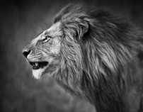 African Wildlife Portraits