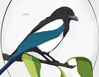 Birds of Seoul (WIP)