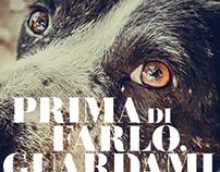Progetto abbandono Cani