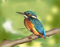 Lonley bird