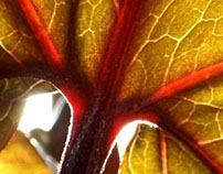 Plant Veins
