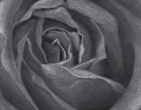 Rose Design Series