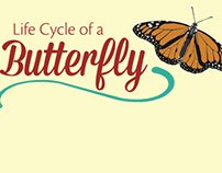 Life Cycle of a Butterfly Science Exhibit