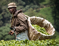 Kenya, Tea Pickers