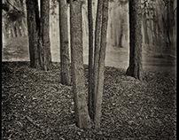 Paper Negatives in the Landscape