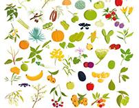 Ilustraciones de naturaleza y plantas