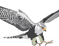 "Ilustrações ""Pássaros do Brasil""."