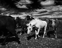 Islanda - Un viaggio senza tempo