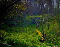 MAGYAN CREATIVE: Someplace Wild