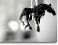Skin Horse // Patron Saint