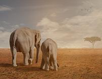 Elephants come home