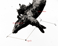... constellation / the cetus