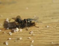 moscas macro
